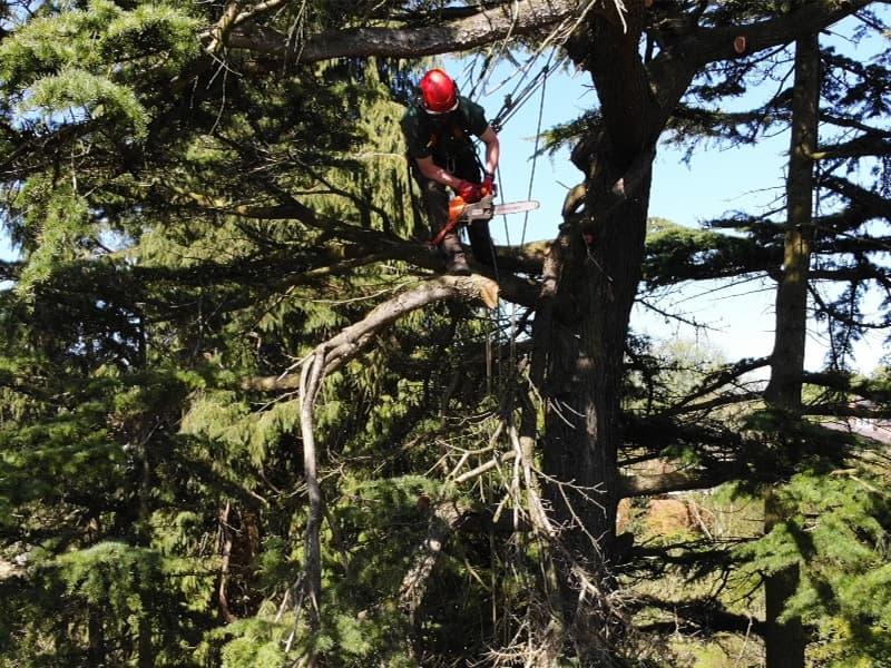 Absolute Treecare